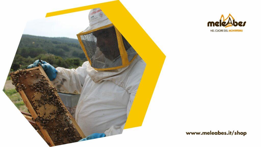Come comunicano le api - blog