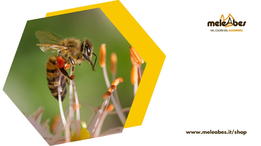 Quali api fanno il miele - blog